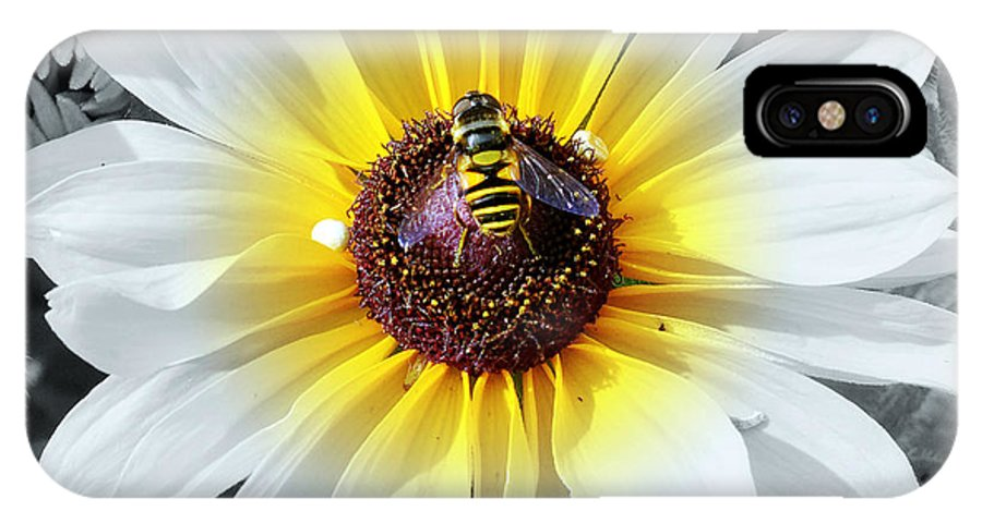 Daisy IPhone X Case featuring the photograph Bee Mine by Charles Feagans