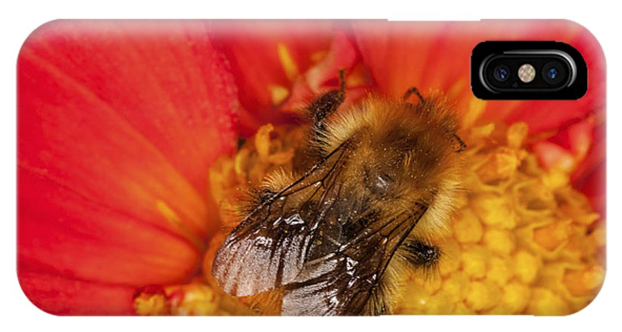 Bee IPhone X Case featuring the photograph Bee On Dahlia - 2 by Diane Macdonald