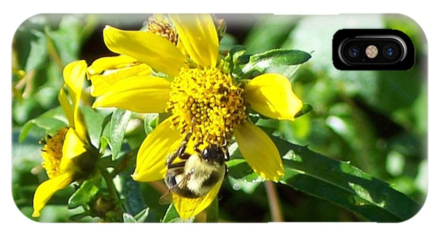 Bee IPhone X Case featuring the photograph Bee On Flower by Michelle Miron-Rebbe