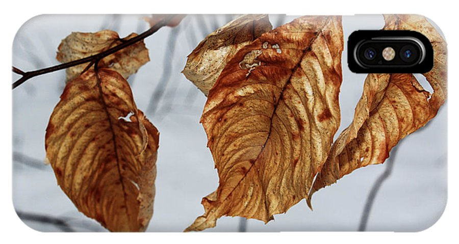 Beech IPhone X / XS Case featuring the photograph Beech Leaves by Andrew Pacheco