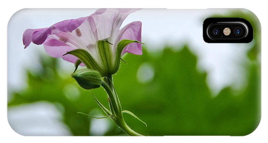 Geranium IPhone X Case featuring the photograph Beeline To The Light by Susie Peek