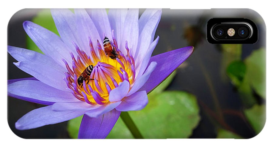 Bee IPhone X Case featuring the photograph Bees In The Lotus by Lauren Rathvon