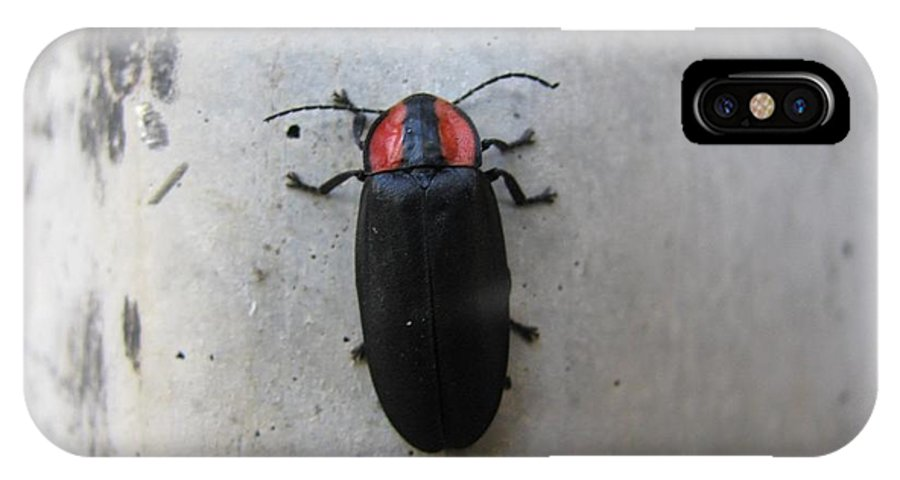 Beetle IPhone X Case featuring the photograph Beetlebug's Stroll by Rebecca Hassinger
