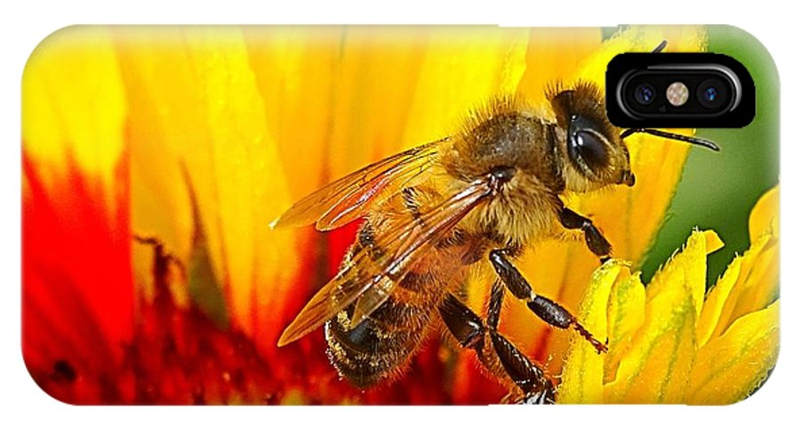 Bee IPhone X Case featuring the photograph Beezy Bee by Nick Kloepping