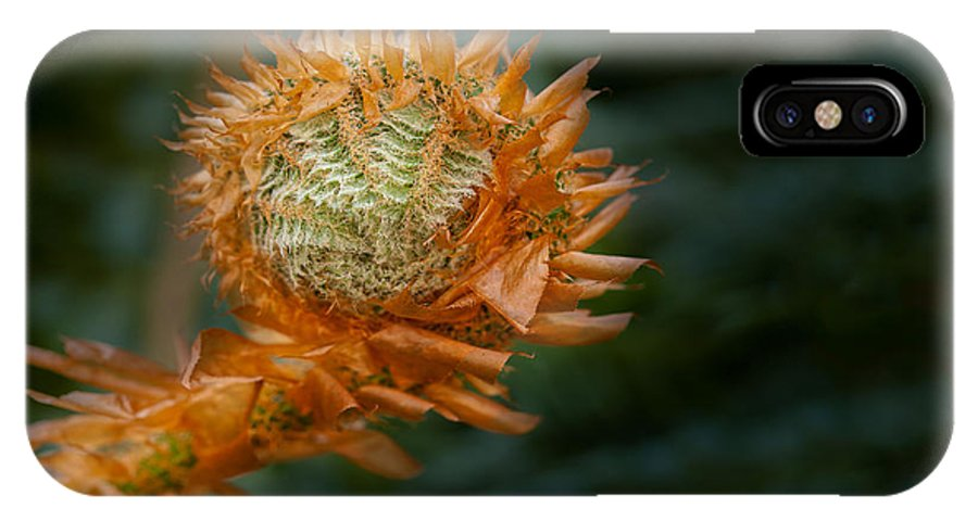 British Columbia IPhone X Case featuring the photograph Beginnings by Jacqui Boonstra
