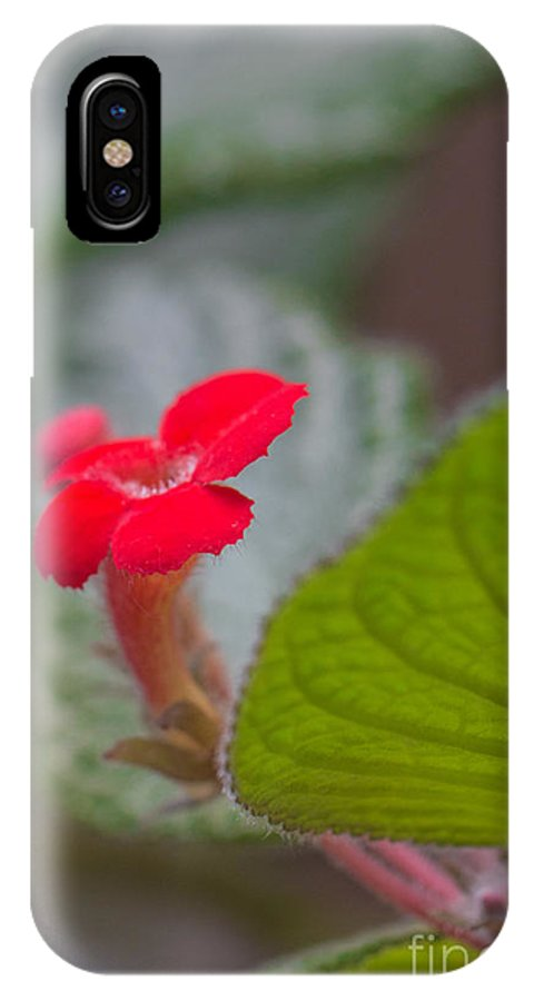 Episcia IPhone X Case featuring the photograph Episcia Flower by Jivko Nakev