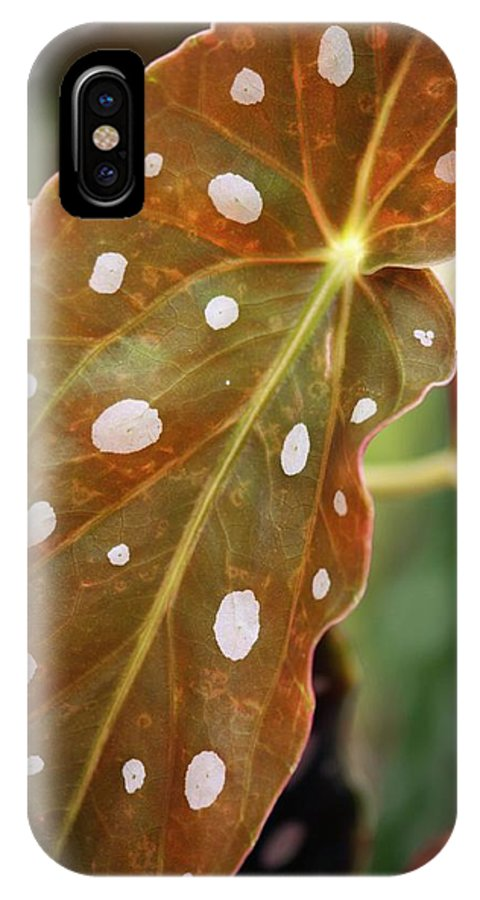 Begonia IPhone X Case featuring the photograph Begonia Maculata 'wightii' by Maria Mosolova
