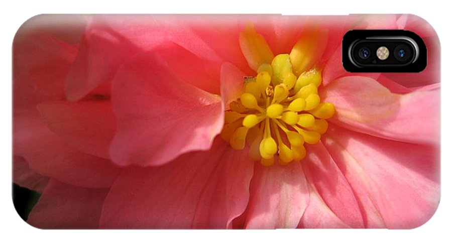 Begonia IPhone X Case featuring the photograph Begonia Named Nonstop Pink by J McCombie