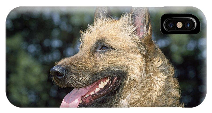 Laekenois IPhone X / XS Case featuring the photograph Belgian Laekenois Dog by Johan De Meester
