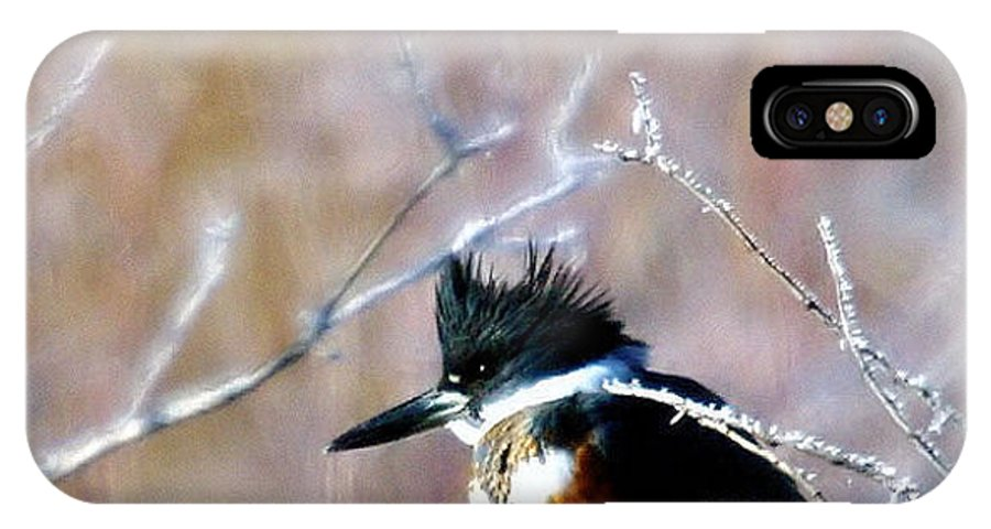 Birds IPhone X Case featuring the photograph Belted Kingfisher by Jeff Swan