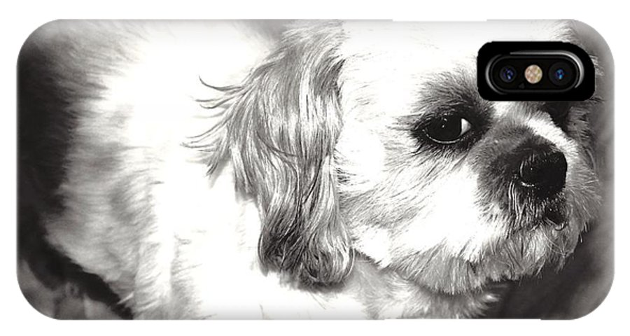 Dog IPhone X Case featuring the photograph Benji by Heather Ann Myers
