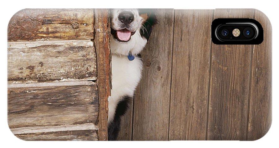 Bernese Mountain Dog IPhone X / XS Case featuring the photograph Bernese Mountain Dog At Log Cabin Door by John Daniels