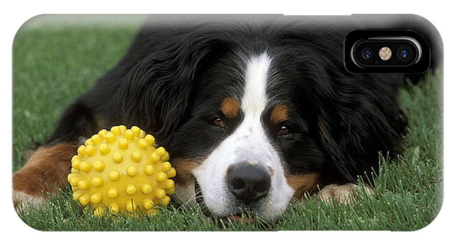 Bernese Mountain Dog IPhone X / XS Case featuring the photograph Bernese Mountain Dog by Rolf Kopfle