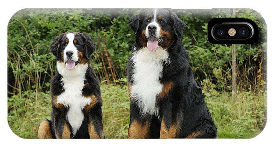 Bernese Mountain Dog IPhone X / XS Case featuring the photograph Bernese Mountain Dogs by John Daniels