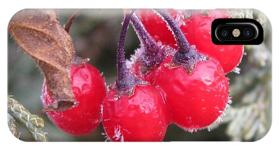 Mccombie IPhone X Case featuring the photograph Berries In Ice by J McCombie