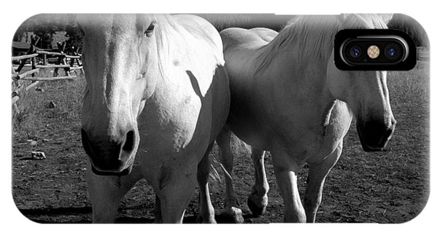 Horses IPhone X Case featuring the photograph Best Friends by Jennie Stewart