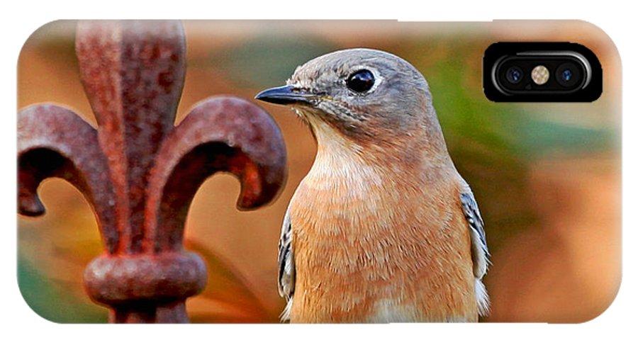 Betty Bluebird IPhone X Case featuring the photograph Fleur De Lis And Bluebird by Luana K Perez