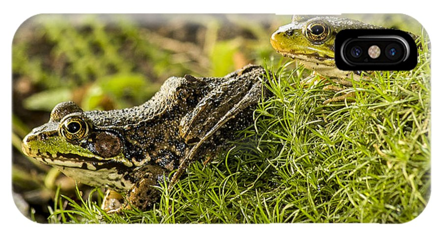 Frog IPhone X Case featuring the photograph Big And Small by Richard Kitchen