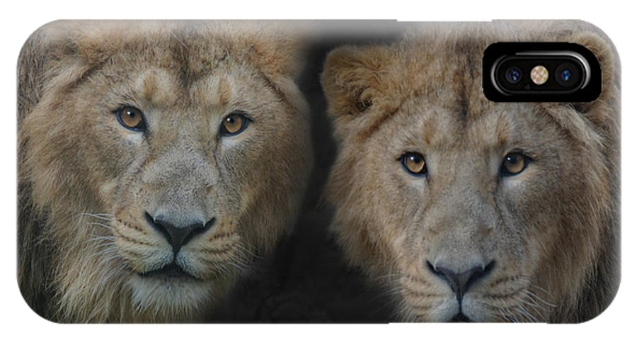 Brothers IPhone X Case featuring the photograph Big Brothers by Joachim G Pinkawa