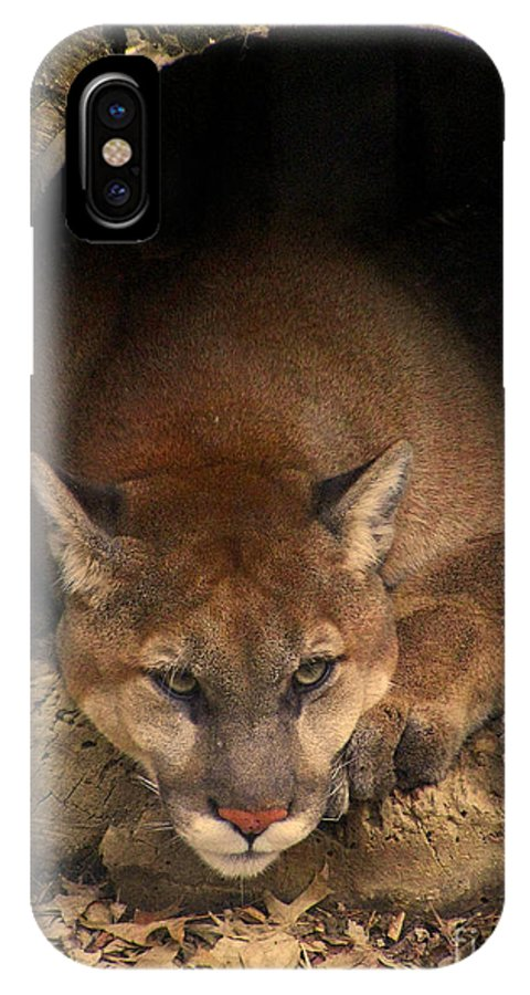 Cougar Cougars Ohio Big Cat Cats Rlclough Zoo Zoos Life IPhone X Case featuring the photograph Big Cats In Ohio. No.17 by RL Clough