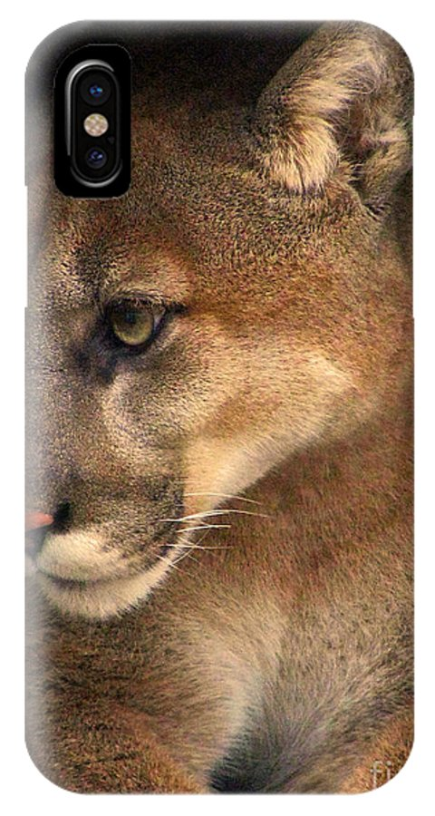 Cougar Cougars Ohio Rlclough IPhone X Case featuring the photograph Big Cats In Ohio. No.20 by RL Clough