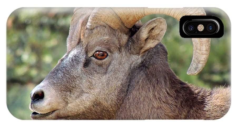 Big Horn IPhone X Case featuring the photograph Big Horn by Lynn Sprowl