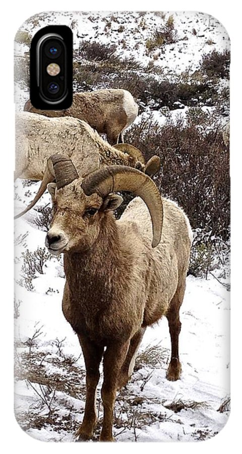 Sheep IPhone X Case featuring the photograph Big Horn Sheep In The Snow by Tisha Clinkenbeard