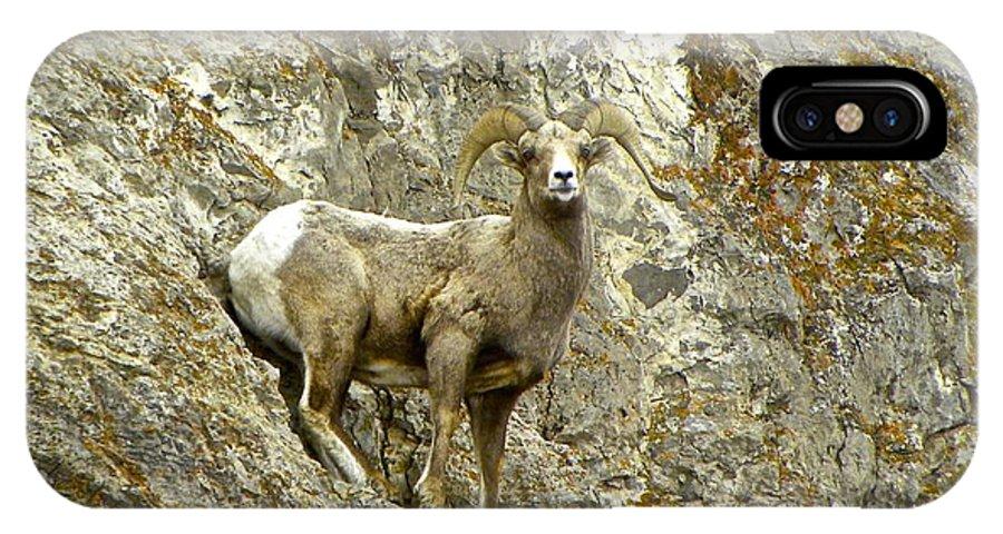 Big Horn Sheep IPhone X Case featuring the photograph Big Horn Sheep On Mountain by Tisha Clinkenbeard