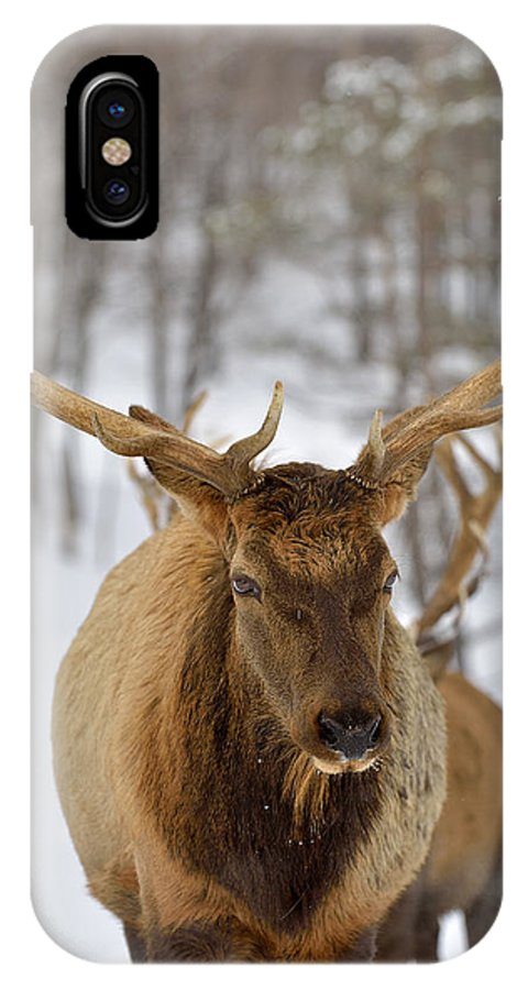 Elk IPhone X Case featuring the photograph Big Rack by Joshua McCullough