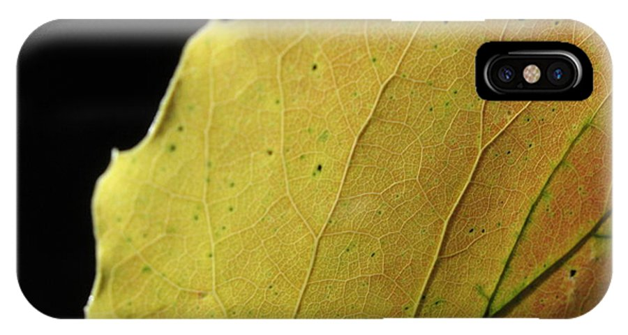 Leaf IPhone X Case featuring the photograph Big-tooth Aspen Leaf on Black by Anna Lisa Yoder