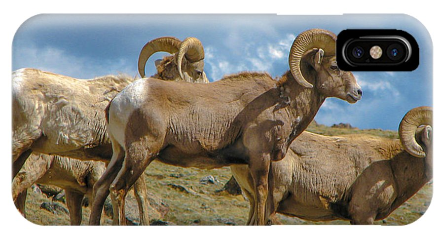 Animal IPhone X Case featuring the photograph Bighorn Sheep by J Havnen