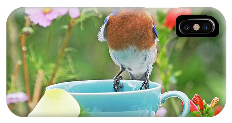 Bluebird IPhone X Case featuring the photograph Billy Bluebird Having Tea by Luana K Perez