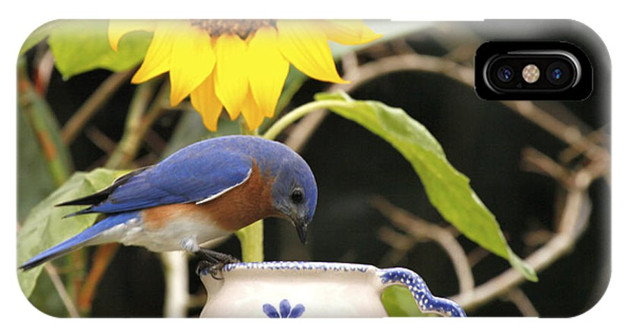 Bluebird Photo IPhone X Case featuring the photograph Bluebird And Tea Cup by Luana K Perez