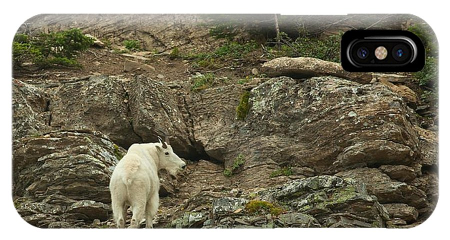 Billy Goat IPhone X Case featuring the photograph Billy Goat 3 by Natural Focal Point Photography
