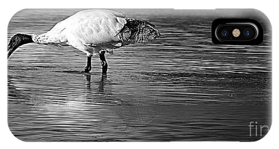Bird IPhone X Case featuring the photograph Bird Drinking by Ben Yassa
