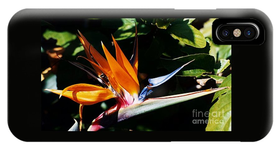 Floral Art Nature Bermuda Flora Tropical Flower Bird Of Paradise Stock Shot Grotto Bay Garden Outdoors Travel Destination Vibrant Greeting Cards For Any Celebration Canvas Print Highly Recommended Metal Frame Poster Print Available On Phone Cases T Shirts Tote Bags Pouches Weekender Tote Bags Shower Curtains Mugs Beach Towels Duvet Covers Round Beach Towels And Throw Pillows IPhone X Case featuring the photograph Grotto Bay Bird Of Paradise # 1 by Marcus Dagan