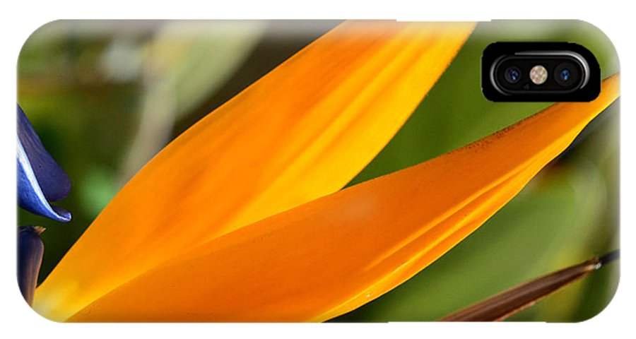 Flower Exotic Nature Beautiful Colorful IPhone X Case featuring the photograph Bird Of Paradise by Eduardo Dinero
