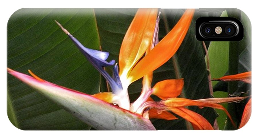 Bird Of Paradise IPhone X Case featuring the photograph Bird Of Paradise Flowers by Kim Bemis