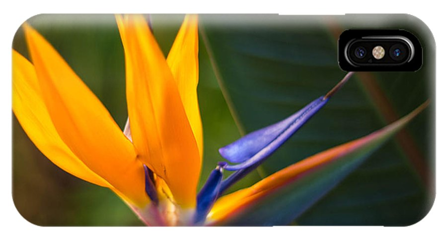 Flower IPhone X Case featuring the photograph Bird Of Paradise by Sue Huffer