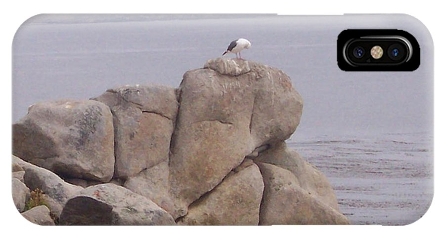 Bird IPhone X Case featuring the photograph Bird On A Rock by Pharris Art