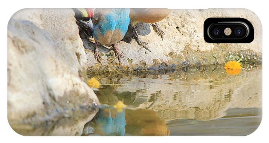 Africa IPhone X Case featuring the photograph Bird Reflection Of Beauty by Hermanus A Alberts