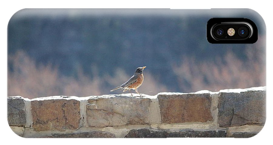 Bird IPhone X Case featuring the photograph Bird Song by Denise Cicchella