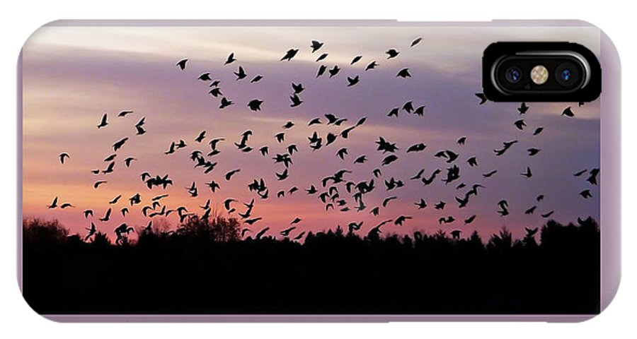 Birds IPhone X Case featuring the photograph Birds At Sunrise Poster by Aimee L Maher ALM GALLERY
