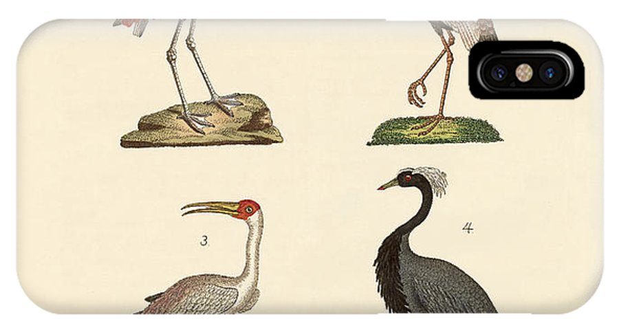 Chilean Flamingo IPhone X Case featuring the drawing Birds From Hot Countries by Splendid Art Prints
