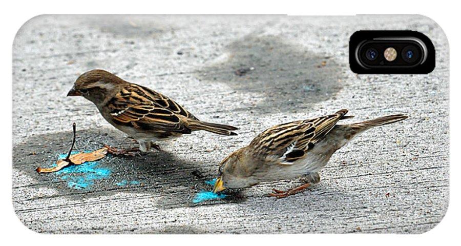 Teresa Blanton IPhone X Case featuring the photograph Birds Like Cotton Candy by Teresa Blanton
