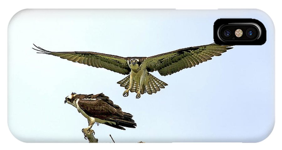Birds IPhone X Case featuring the photograph Birds Of Prey by Deborah Benoit