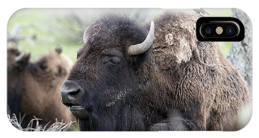 Bison IPhone X Case featuring the photograph Bison And Birds by Deby Dixon