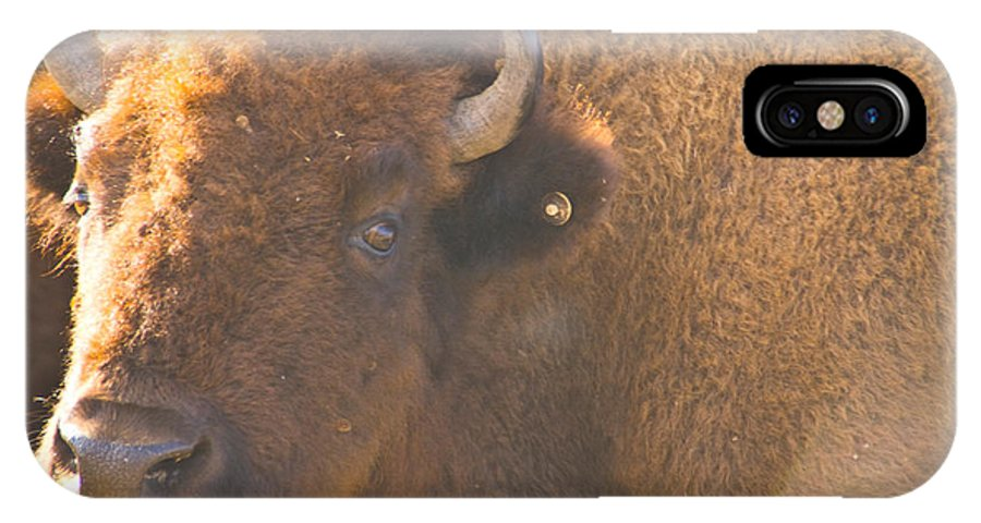 Bison Photographs IPhone X Case featuring the photograph Bison Evening by Vernis Maxwell