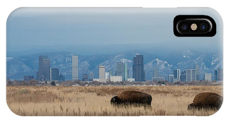Bison IPhone X Case featuring the photograph Bison Graze With Denver Colorado In The Background by Tony Hake