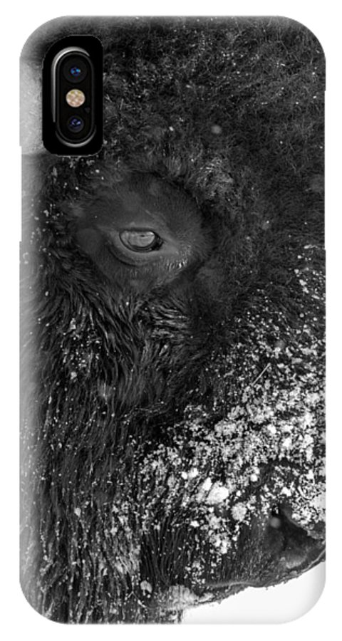 Bison IPhone X Case featuring the photograph Bison In Black And White by Tony Hake